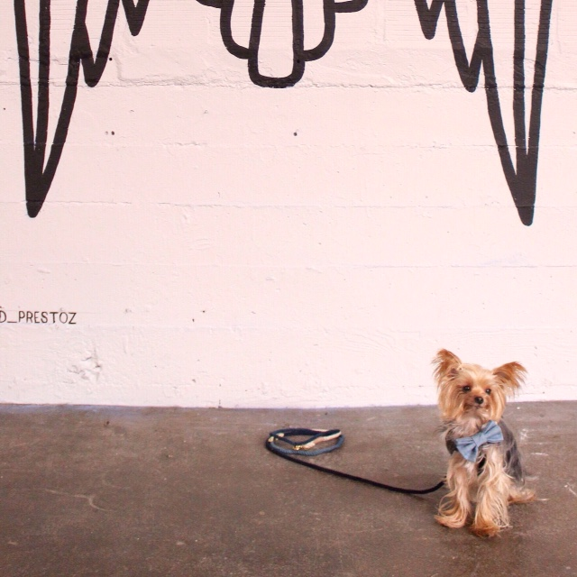 MAX-BONE | Stella Chambray Bowtie Collar + FOUND MY ANIMAL | Indigo Ombre Adjustable Lead
