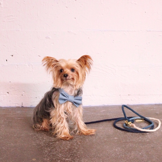 MAX-BONE | Stella Chambray Bowtie Collar