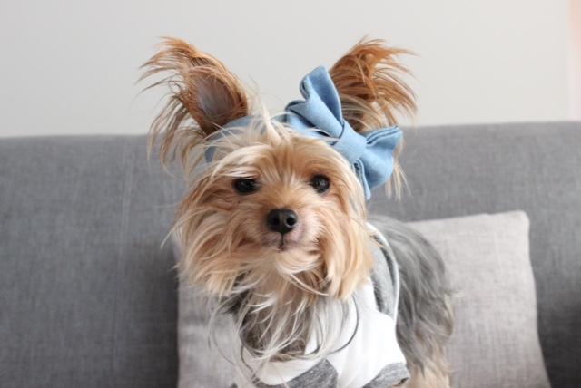 MAX-BONE | Stella Chambray Bowtie Collar + PENN + POOCH | Babe T-Shirt