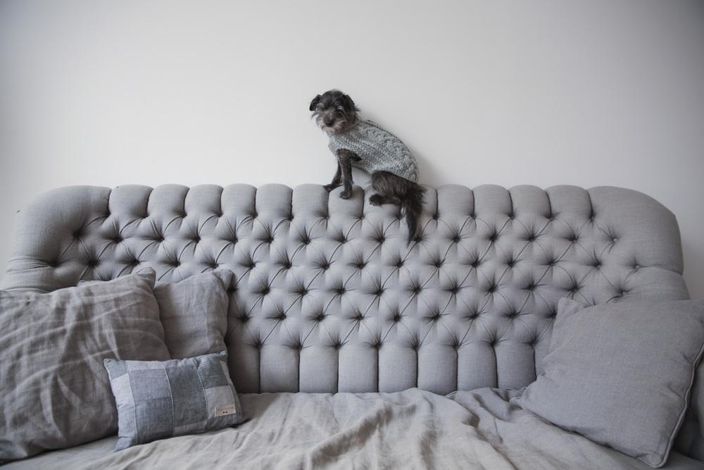 DOG & CO. | HOME Sweet HOME
