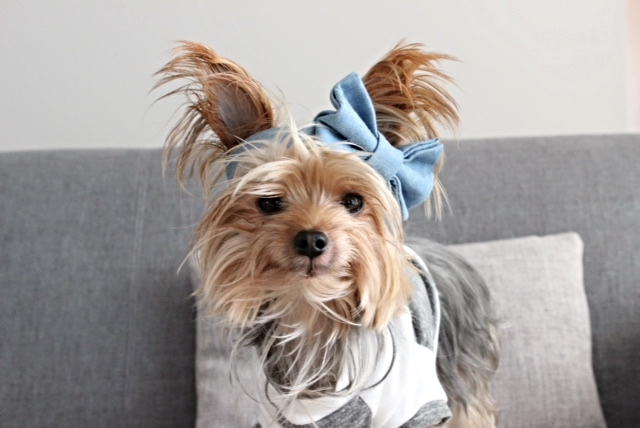 WILLIE CUTE for DOG & CO. | Denim Doggy