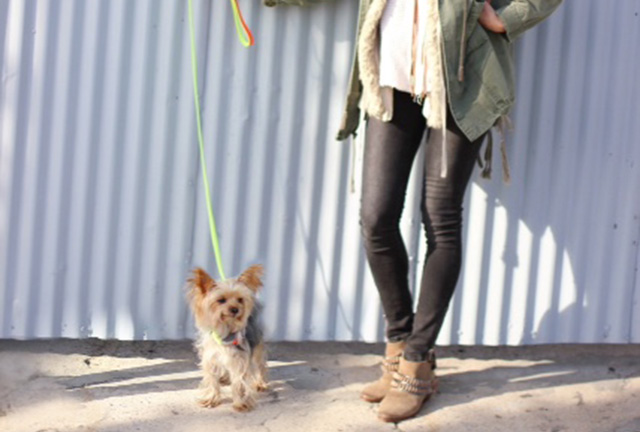 WILLIE CUTE for DOG & CO. | Nice in Neon