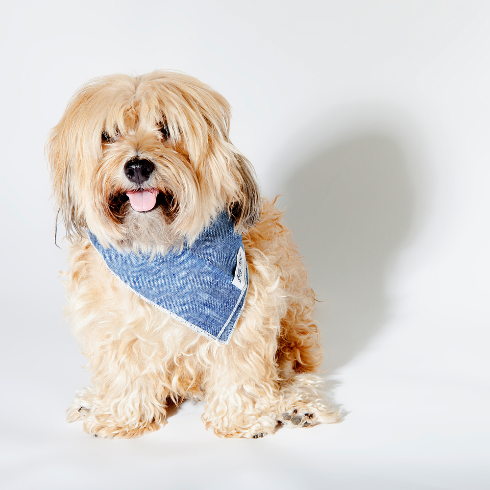 DOG & CO. | Denim, Naturally