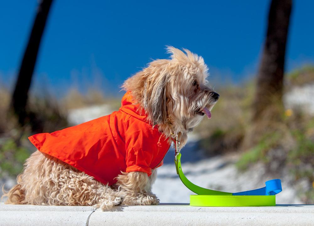 WAGWEAR | Rainbreaker + WARE of the DOG | Neon Colorblock Lead