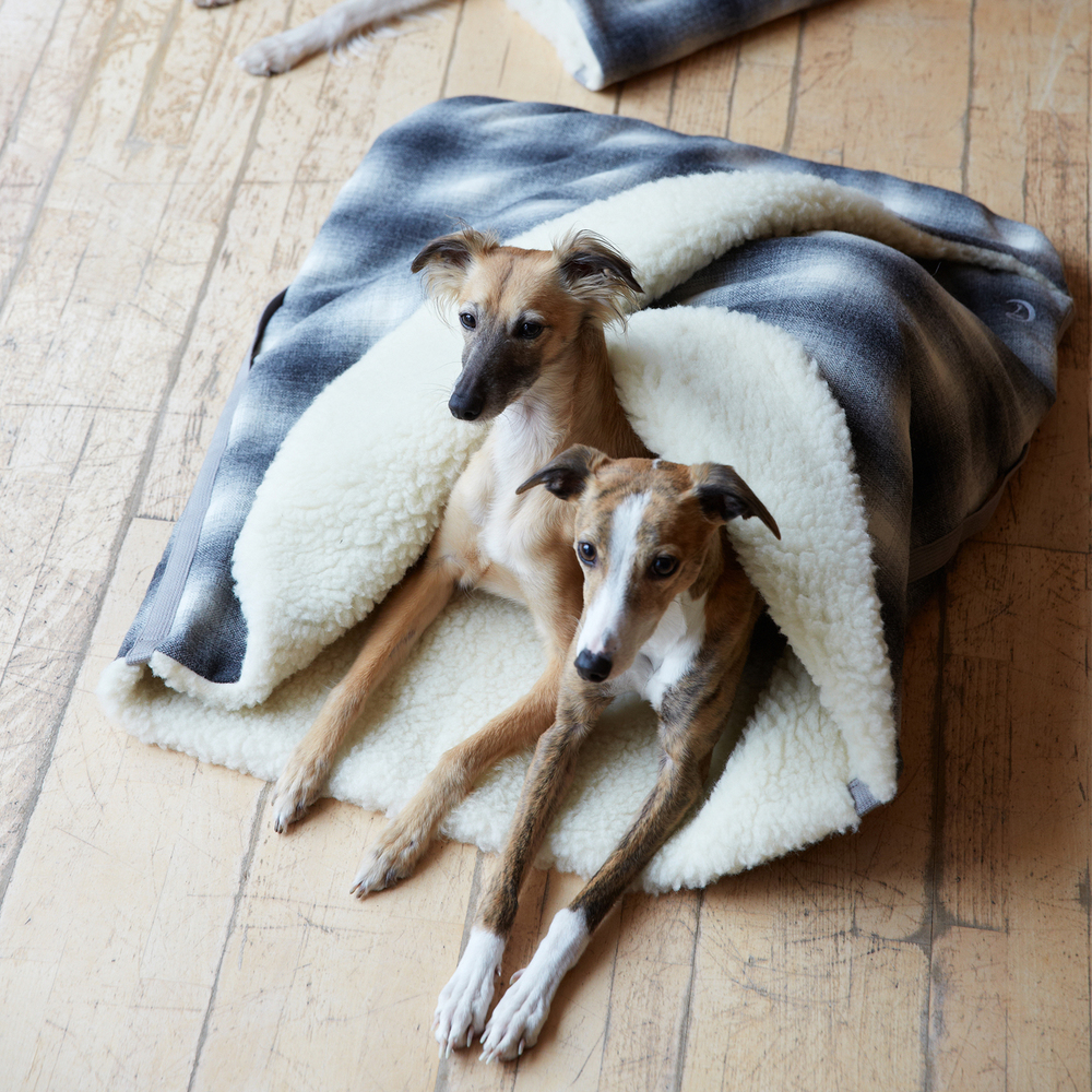 DOG & CO. | At Home with CLOUD 7