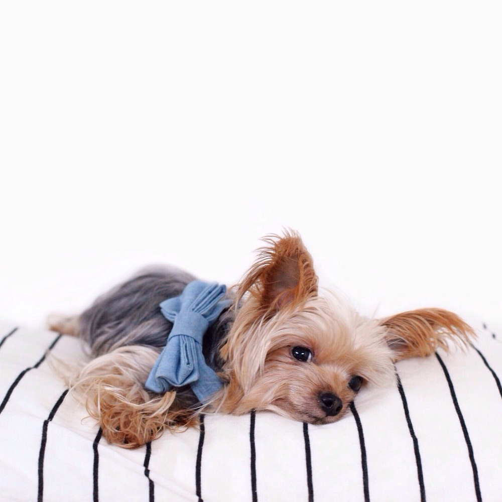 DOG & CO. | Willie Cute