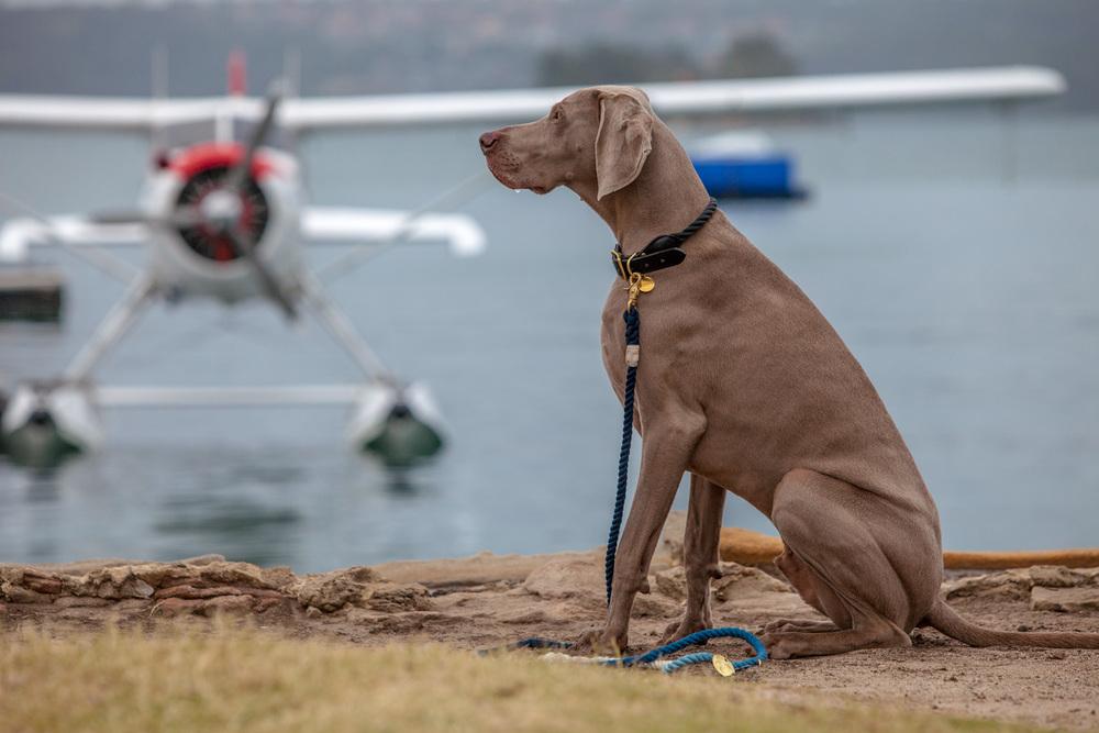 FOUND MY ANIMAL | Rope Collar + Adjustable Lead