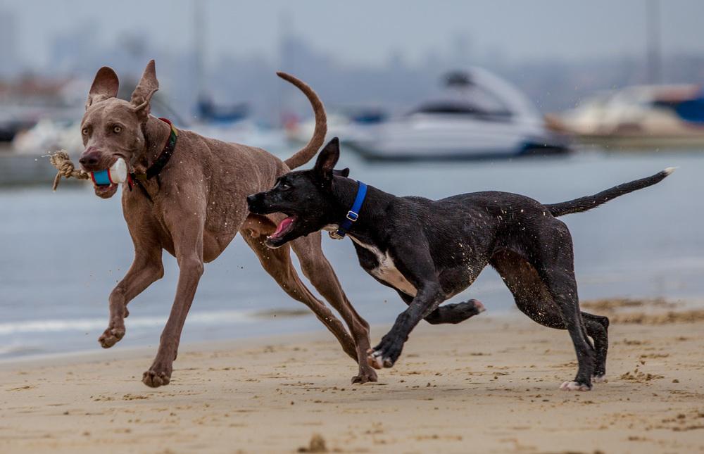 WAGWEAR | Cordura Collar in Camo + WARE of the DOG | Nylon Collar in Orange & Blue + WAGGO | Floats My Boat Buoy Toy
