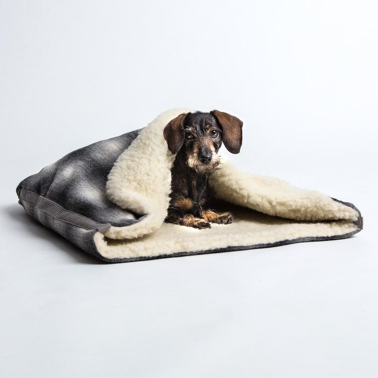 DOG & CO. | CLOUD 7