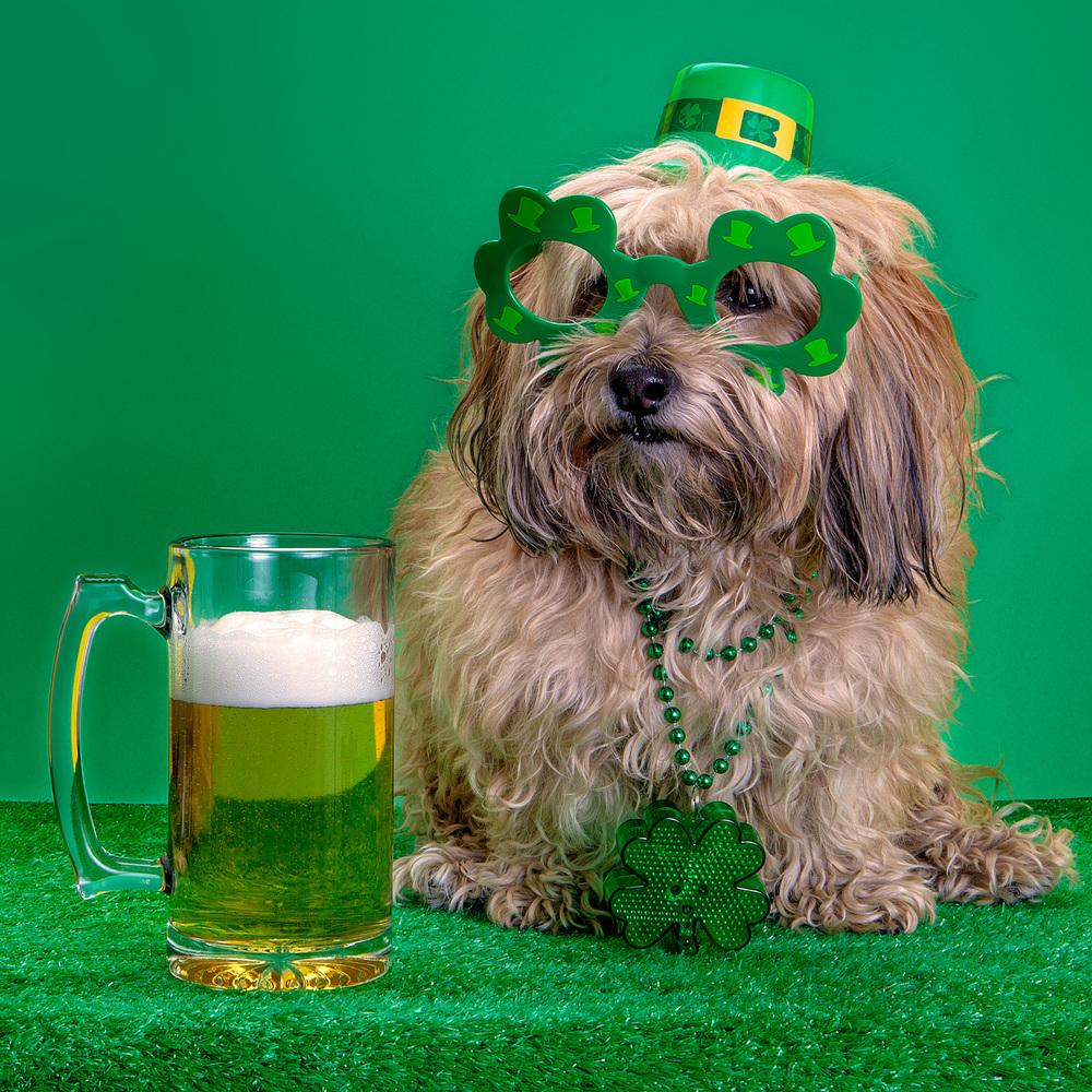 DOG & CO. | Happy St Patrick's Day