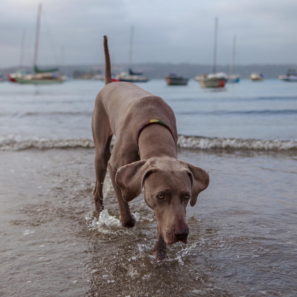 DOG & CO. | A Day in Rose Bay