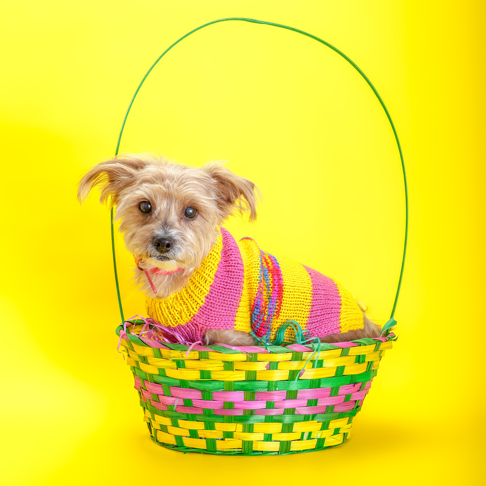 DOG & CO. | Bright Stripe Sweater