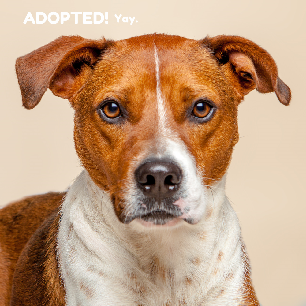 SUGAR MUTTS RESCUE (April 2015) | Donald - ADOPTED!
