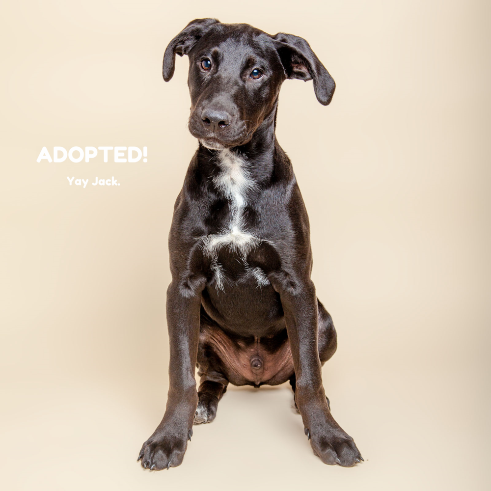 SUGAR MUTTS RESCUE (May 2015) | Jack - ADOPTED!