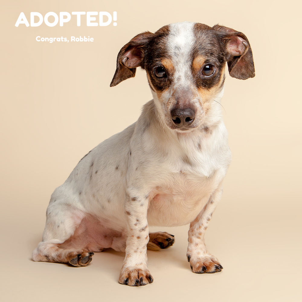 SUGAR MUTTS RESCUE (April 2015) | Robbie - ADOPTED!