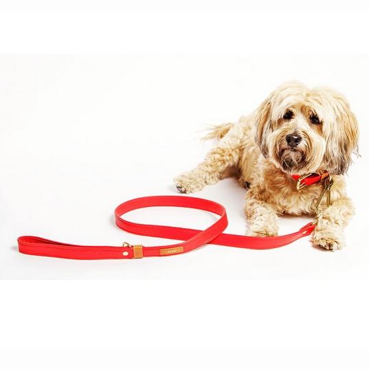 DOG & CO. | YARK