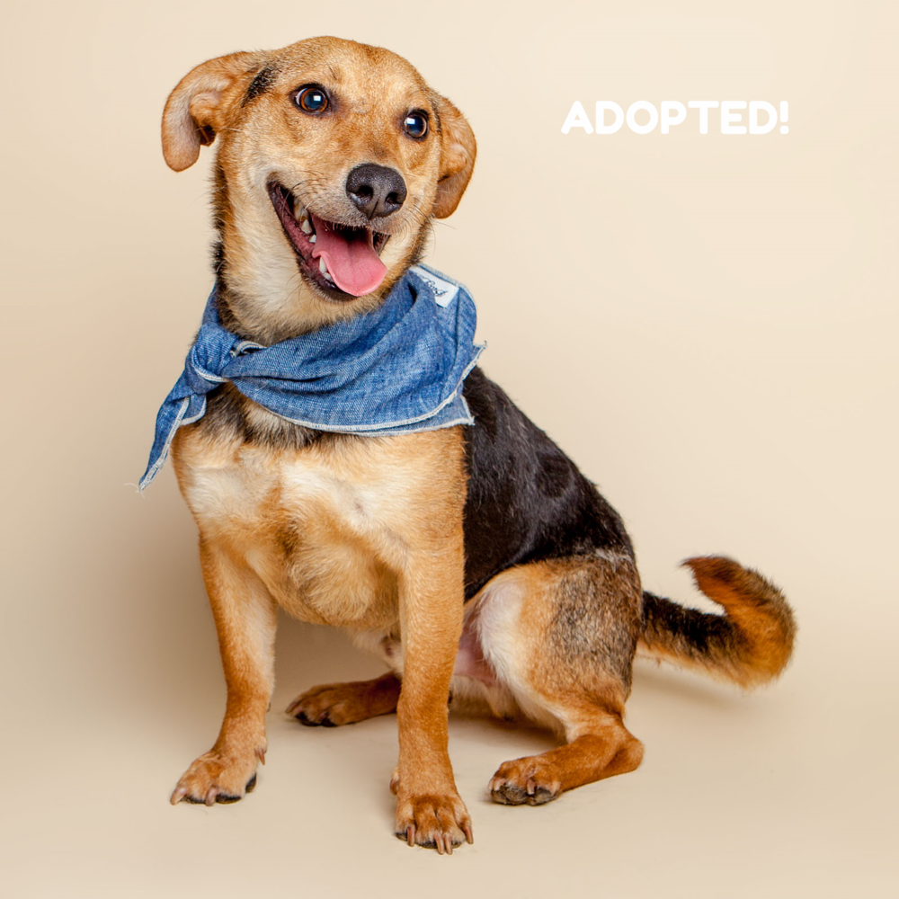 SUGAR MUTTS RESCUE (April 2015) | Starship - ADOPTED!