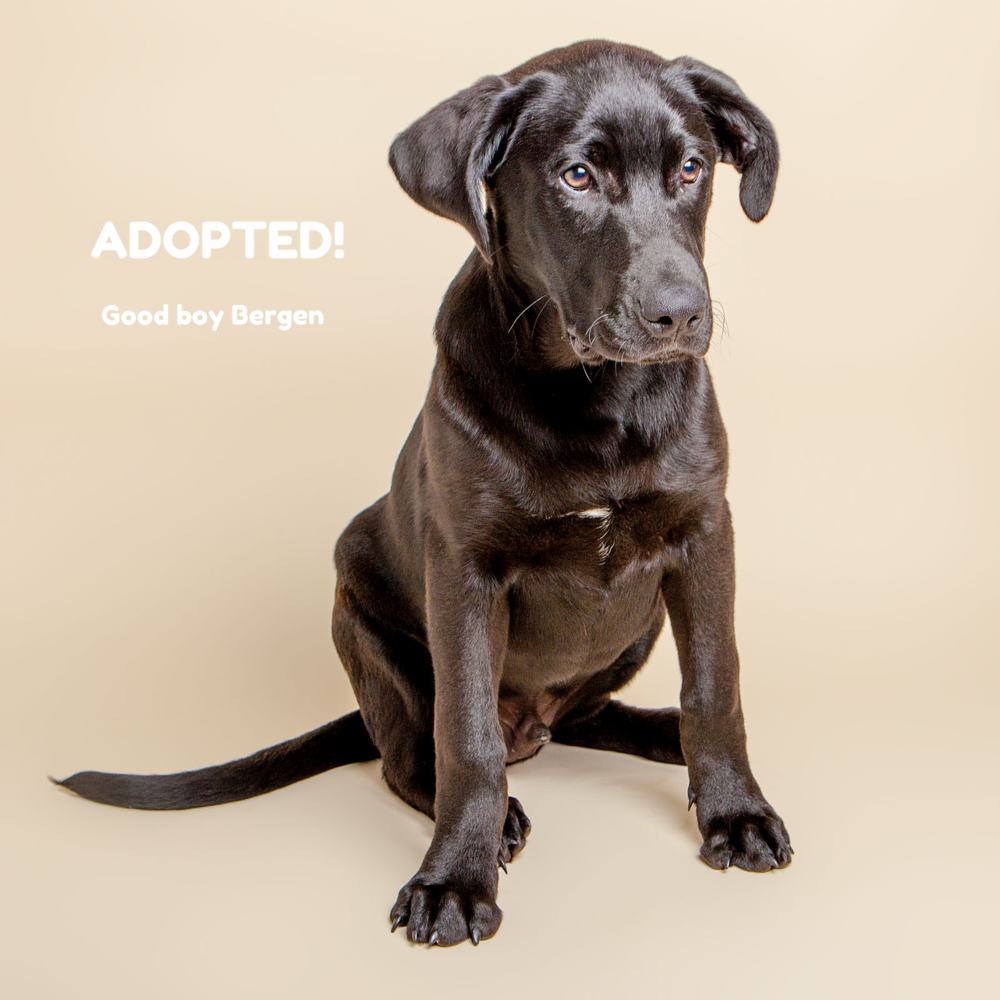 SUGAR MUTTS RESCUE (May 2015) | Bergen - ADOPTED!