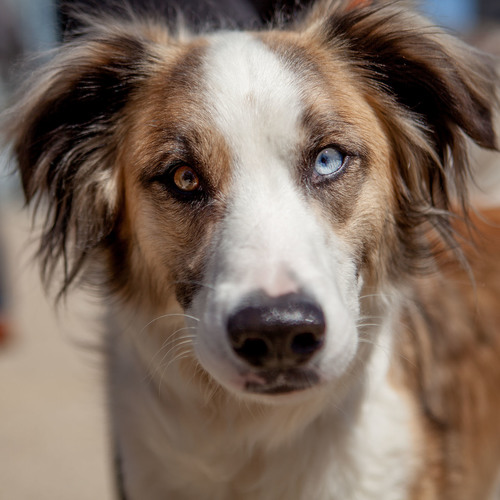 DOG & CO.   Human + Hound - Sarah + Shaggy & Ozzie