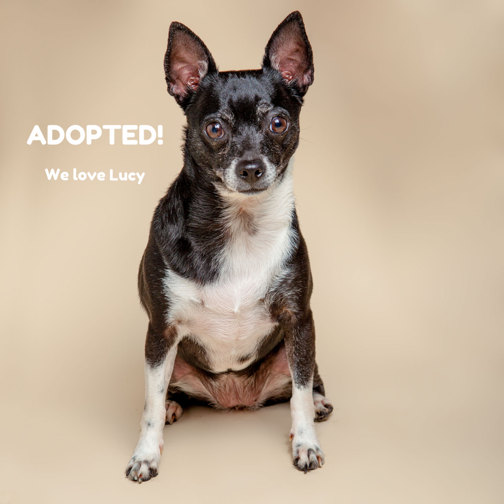 SUGAR MUTTS RESCUE (May 2015) | Lucy - ADOPTED!