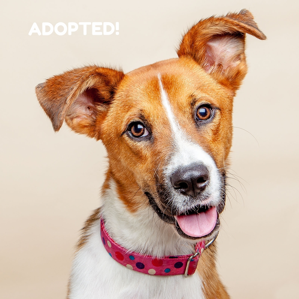 Lexi, June 2015 - Adopted!