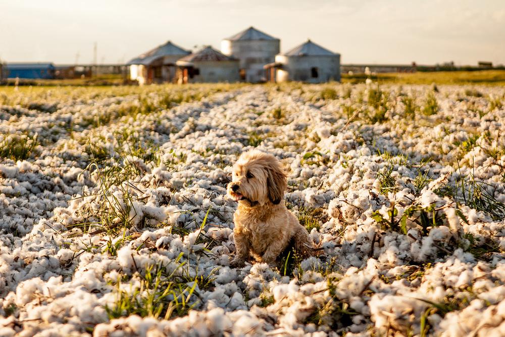 DOG & CO.   Delta Dog Blues