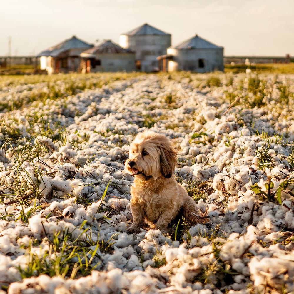 DOG & CO. | Delta Dog