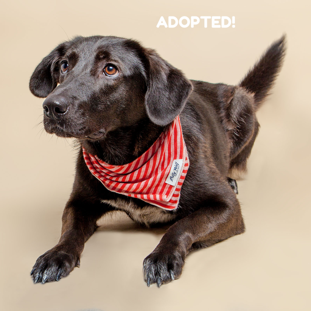 SUGAR MUTTS RESCUE (May 2015) | Billie Jean - ADOPTED!