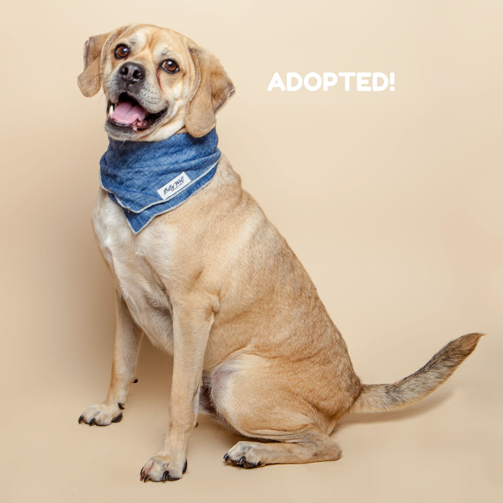 SUGAR MUTTS RESCUE (April 2015) | Roman - ADOPTED!