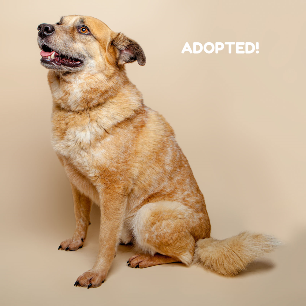 SUGAR MUTTS RESCUE (May 2015) | Ben- ADOPTED!