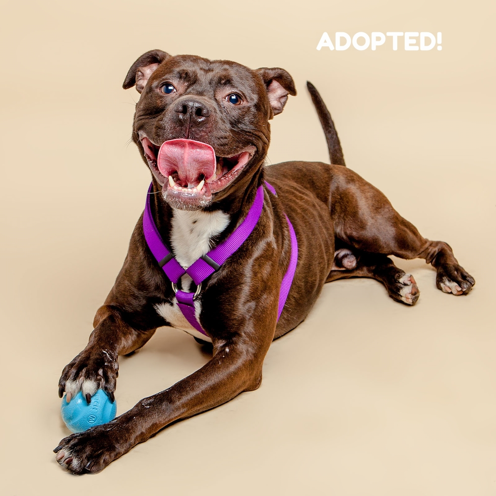 SUGAR MUTTS RESCUE (May 2015) | Rex - ADOPTED!