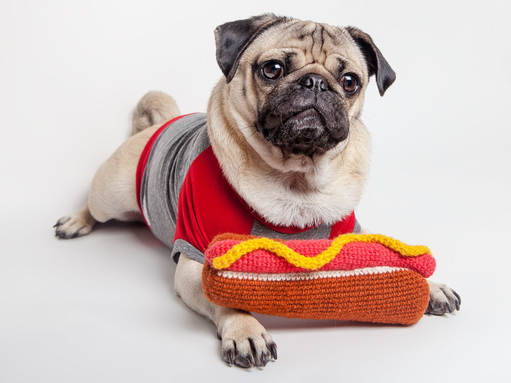WARE of the DOG | Hand Knit Hot Dog Toy