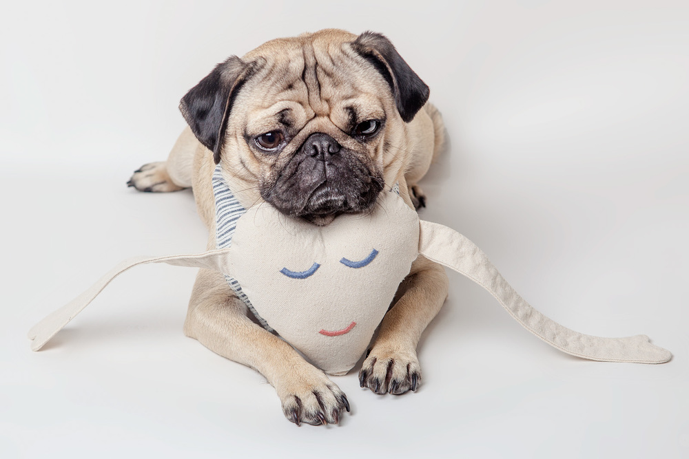 MAGGIE and BARNEY | Happy Heart Canvas Dog Toy