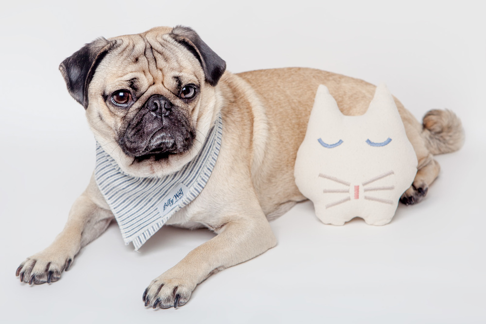 MAGGIE and BARNEY | Sleepy Cat Dog Toy