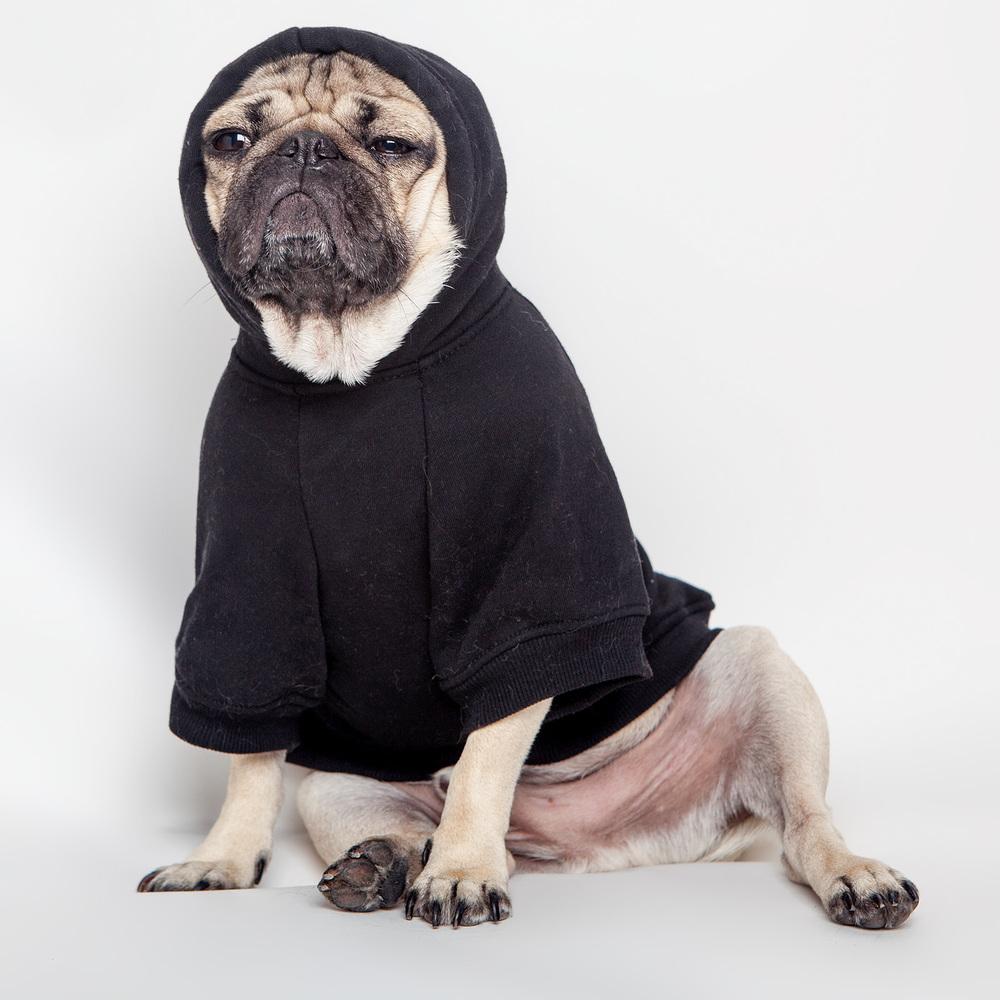 PETHAUS   Bones Dog Hoodie