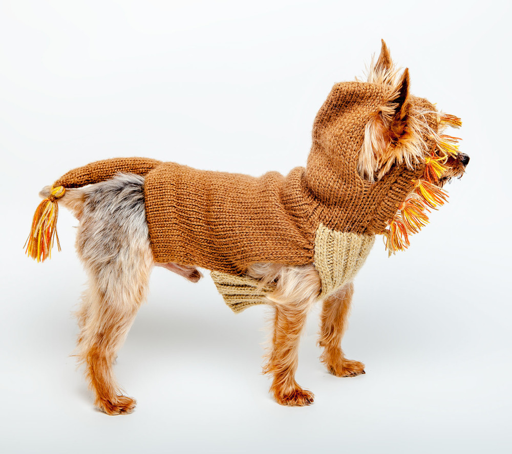 DOG & CO. | Lion Dog Sweater