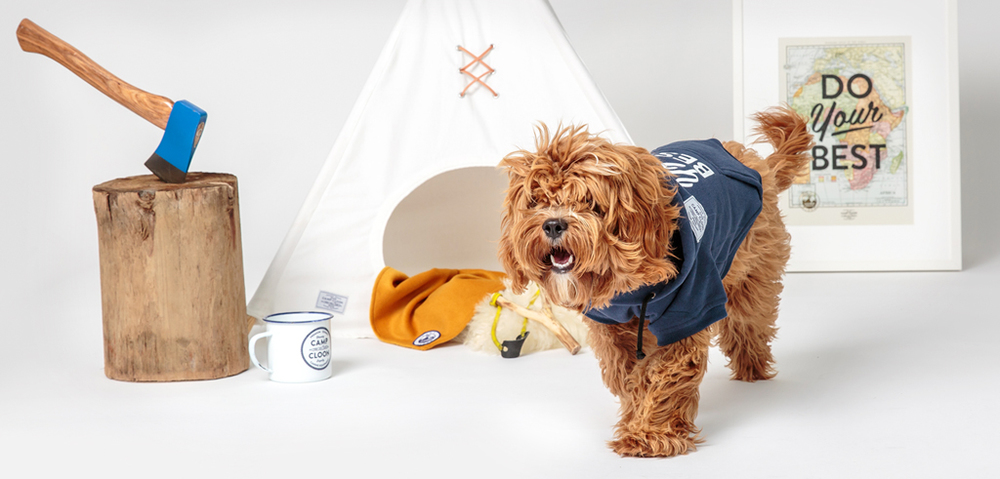 DOG & CO. | Camp Cloon