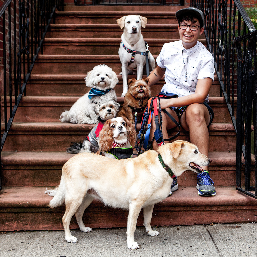 Clockwise from top :  Milo, Hadley, Anna, Diego, Waffles, Elvis, Fallon (center)