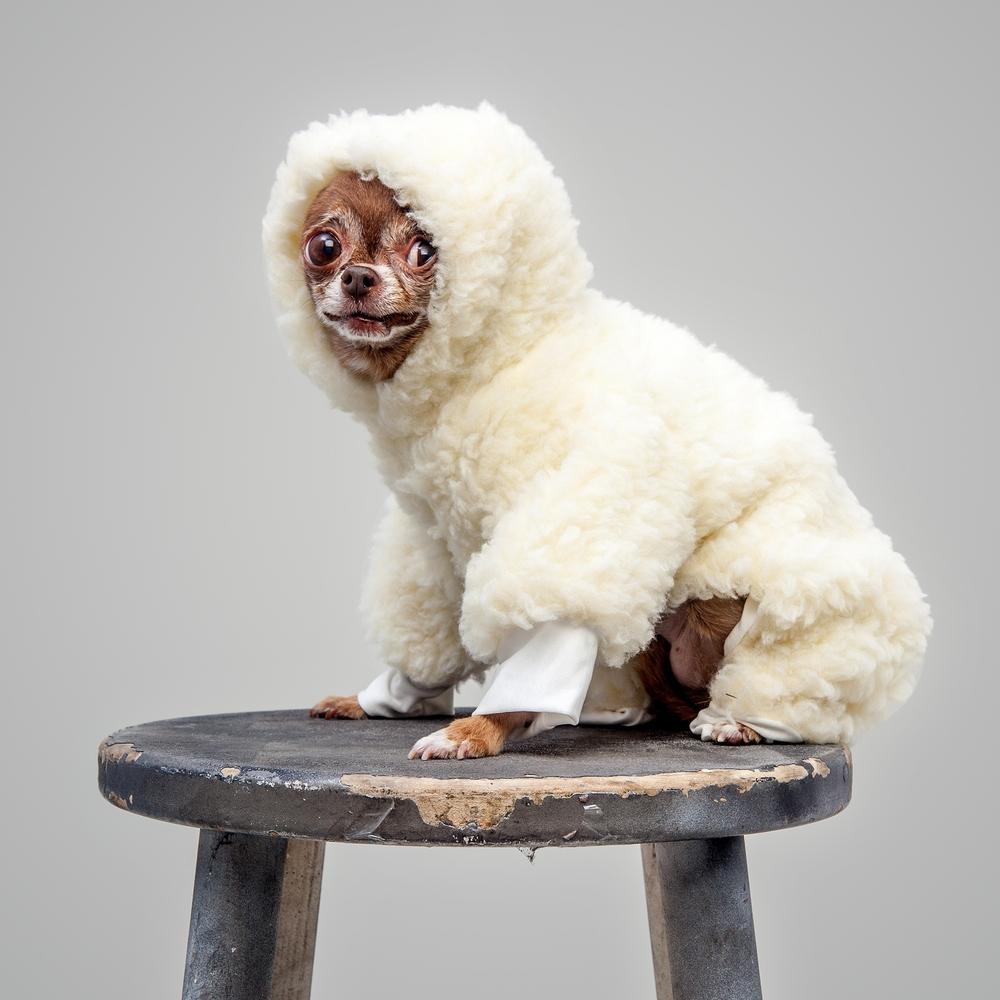DOG & CO. | Dog Pyjama in Cream Sherpa