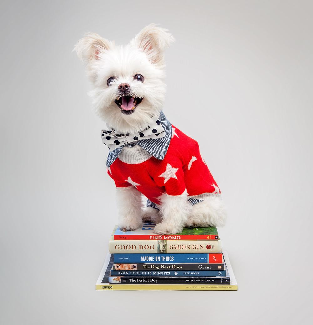 RUBY RUFUS | Stella Star Sweater + DOG & CO. | Railroad Stripe Button Up Shirt + MAX-BONE | Harrison Bow Tie Collar