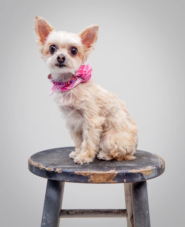 IKE + STELLA | Pink Stripe Small Dog Collar + BONES SOCIETY | Shibori Tie Dye Bandana