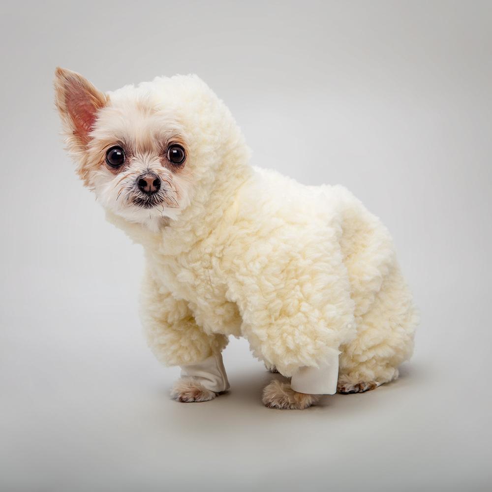DOG & CO. | Dog Pyjama in Creme Sherpa