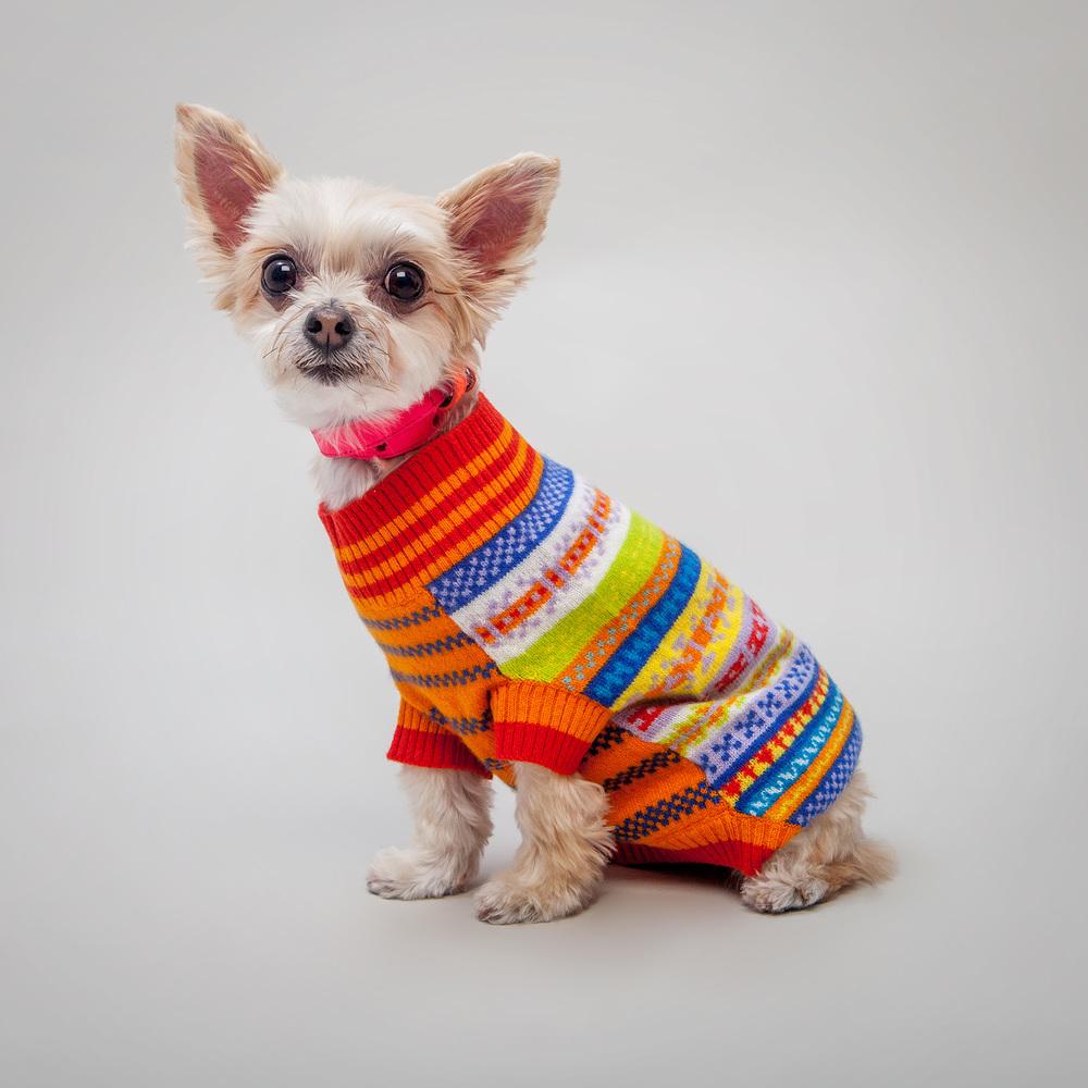 WARE of the DOG | Neon Leather Collar + RUBY RUFUS | Tiggy Peruvian Sweater