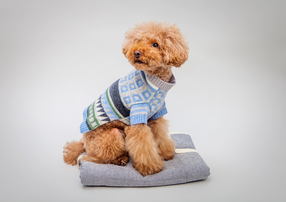 WARE of the DOG | Jacquard Pullover Sweater  +  CLOUD 7 | Travel Bed