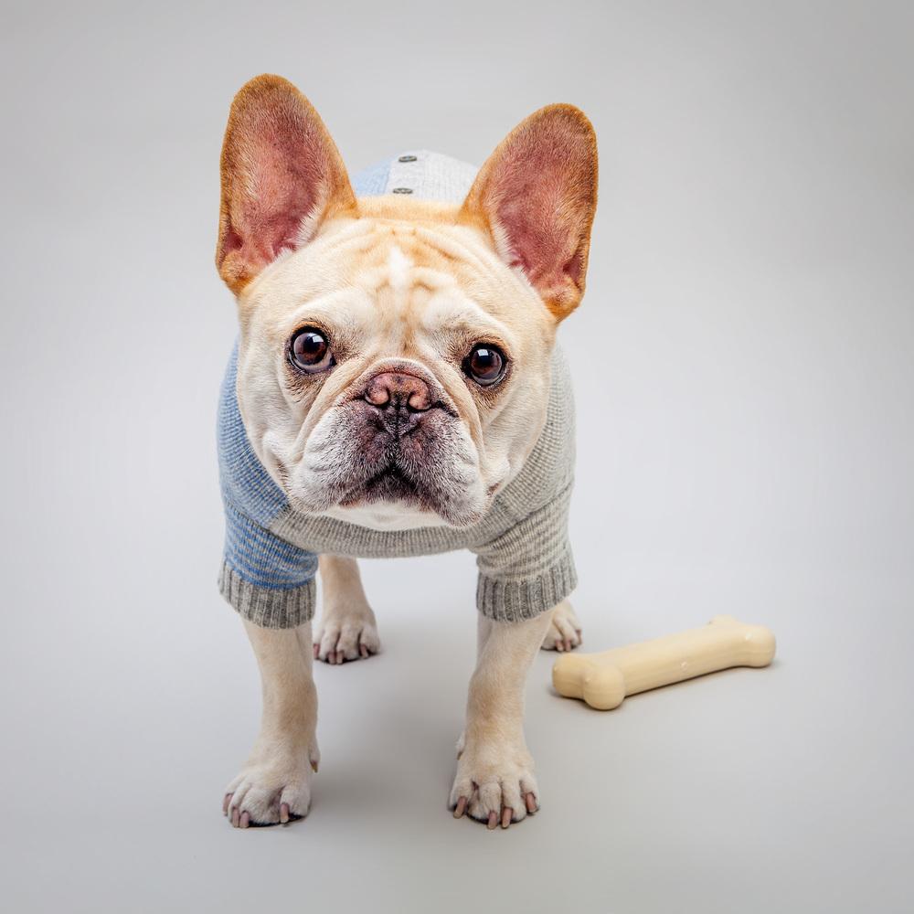 WARE of the DOG | Striped Cardigan+ TASTY BONE | I am Cheese Bone