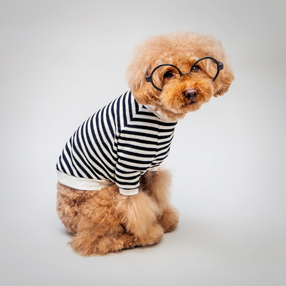 DOG & CO. | Striped Knit Pullover (Coming Soon!)
