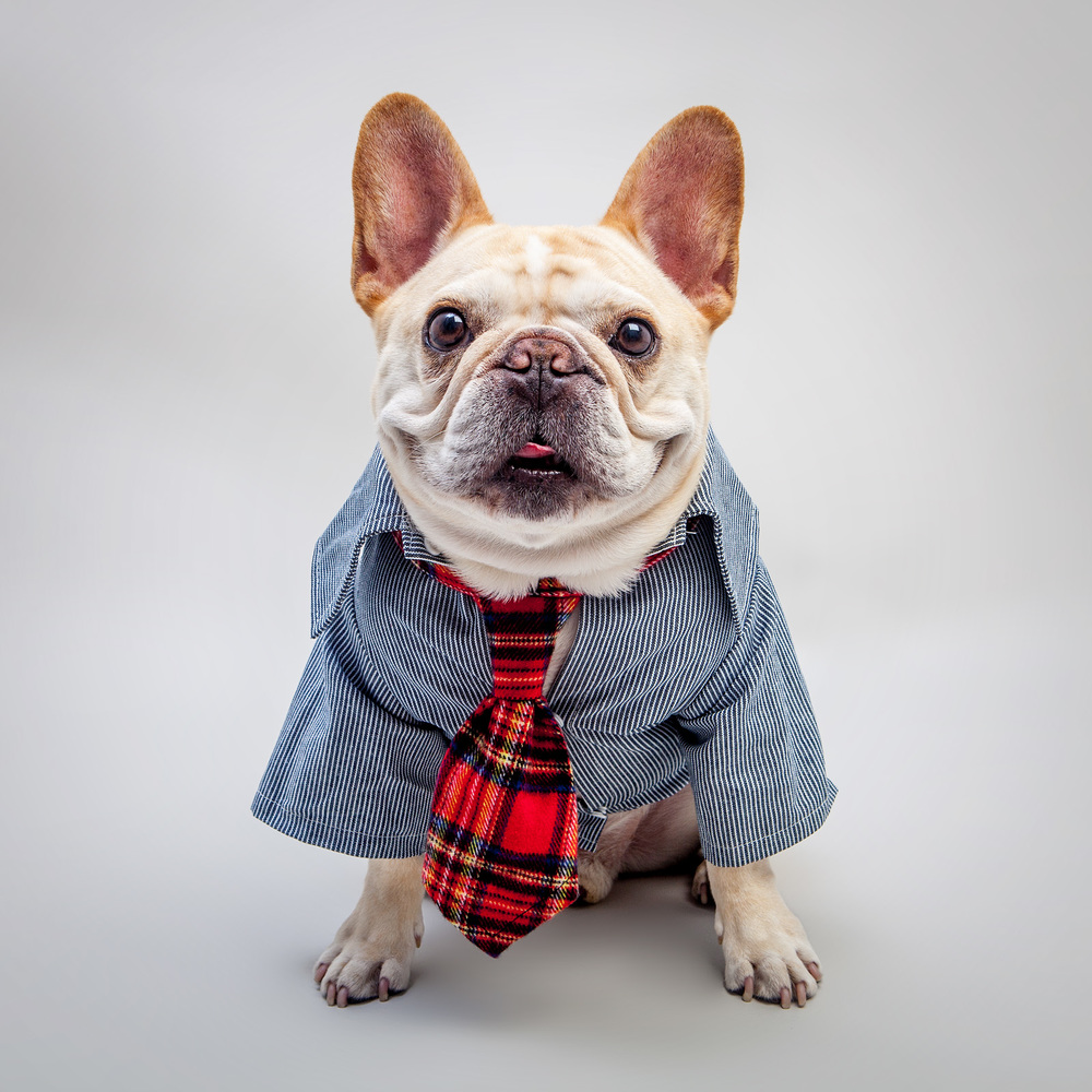 WARE of the DOG | Striped Cardigan + TASTY BONE | I am Cheese Bone