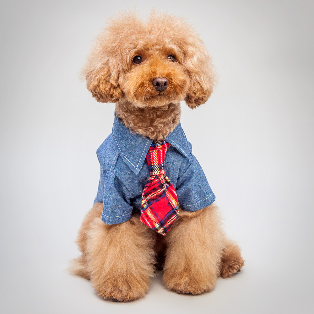 DOG & CO. | Chambray Button Up Shirt  +  Ruff Ties | Bloody Plaid Neck Tie
