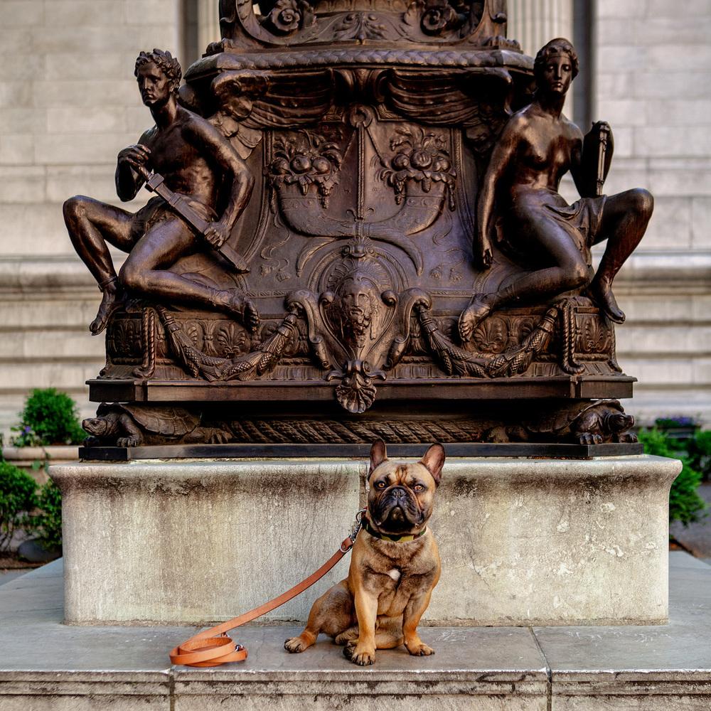 WAGWEAR | Camo Cordura Collar + TANNER GOODS | Canine Lead