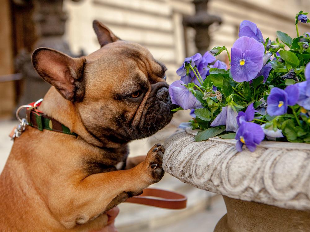 DOG & CO. | DUSEN DUSEN